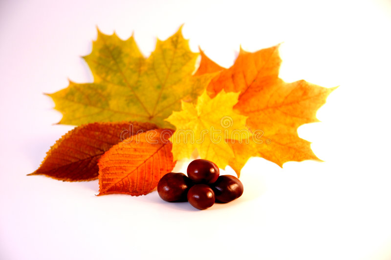 Autum. Background with colorful fall leaves stock photo