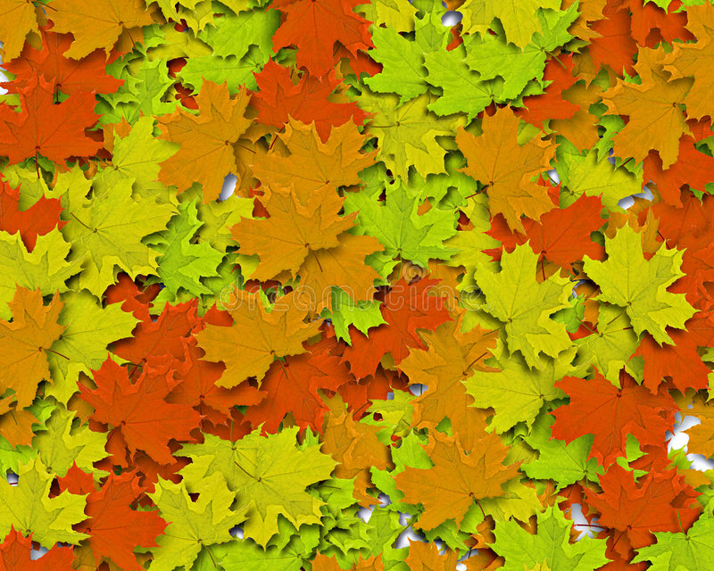 Autum Background. With colorful fall leaves falling down from tree stock images