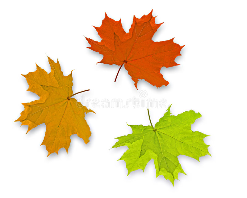 Autum Background. With 3 colorful fall leaves stock images