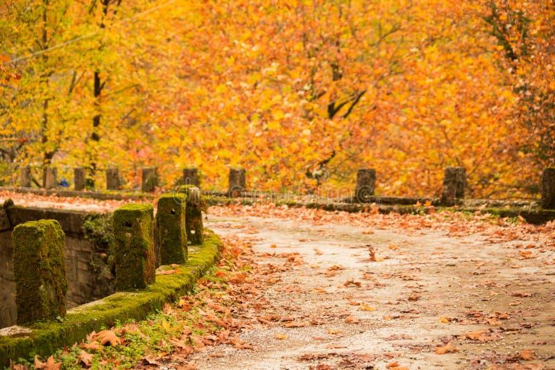 Autum background bridge and yellow tree leaves in village Zgara. Arta stock photos