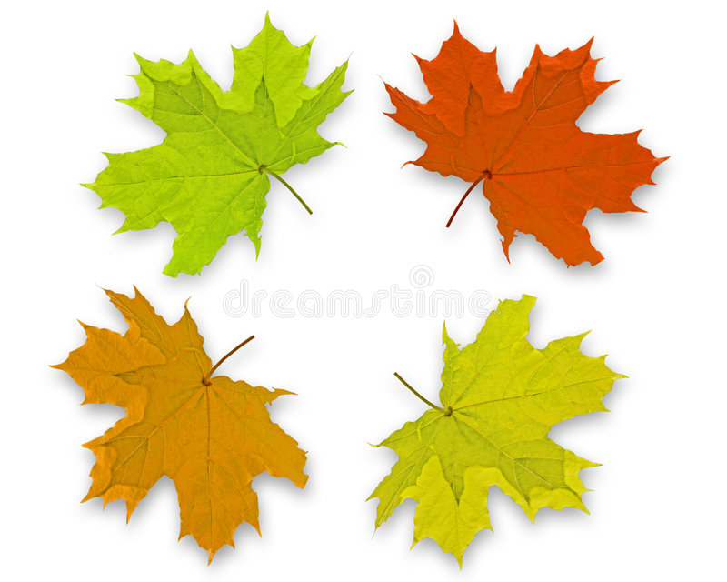 Autum Background leaves. Autum Background with colorful fall leaves falling down from tree royalty free stock photography