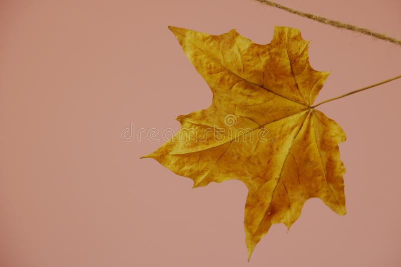 Autumn mood when we need fell cosy. Autum coming and we need to feel cosy and warm stock images