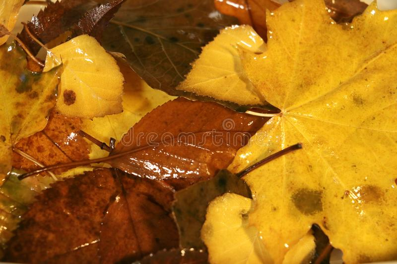 Autumn mood when we need fell cosy. Autum coming and we need to feel cosy and warm royalty free stock photo