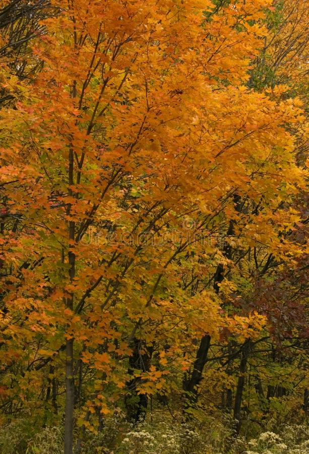 Autum coulors. In Killarney Park royalty free stock photo