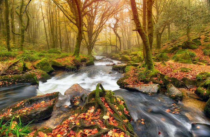 Autum Forest River royalty-vrije stock foto