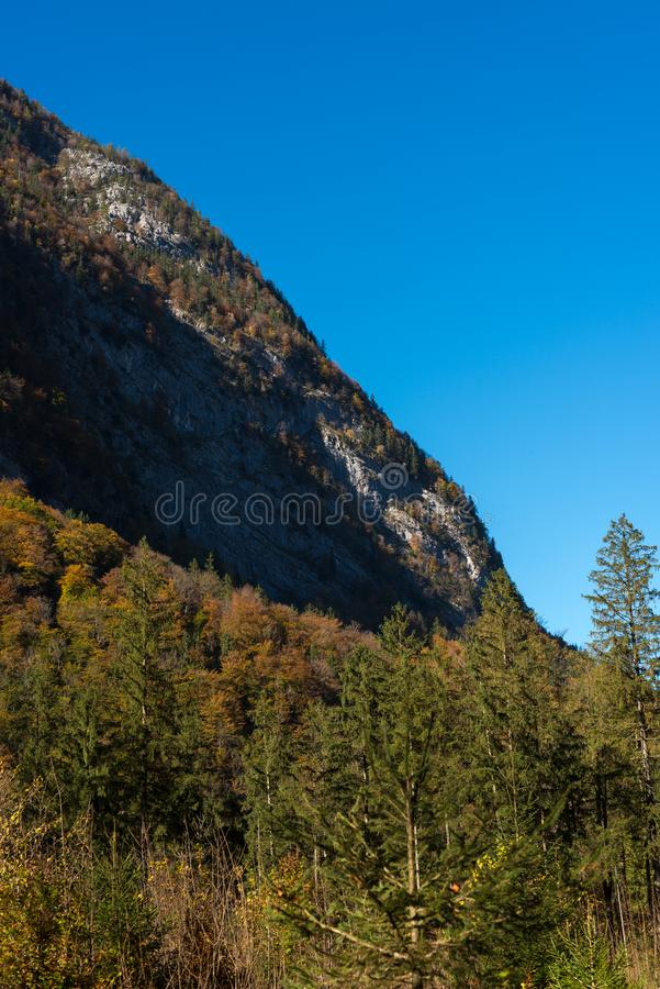 Autum forreest with little road in th middle royalty free stock image