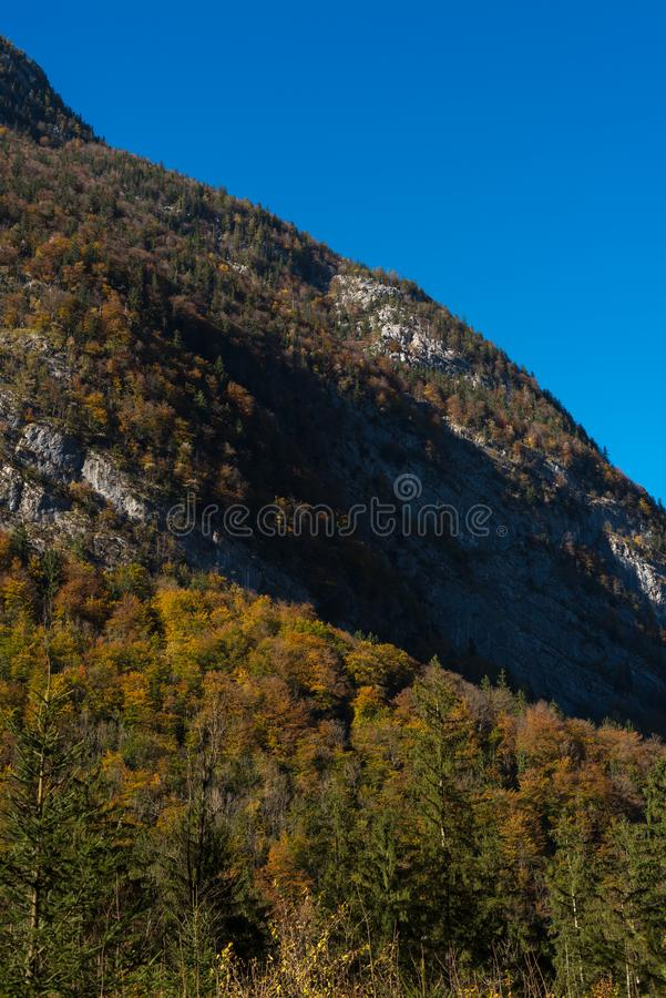 Autum forrest single trees in front royalty free stock photos