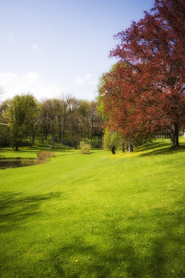 Autum garden. With trees and grass stock photo