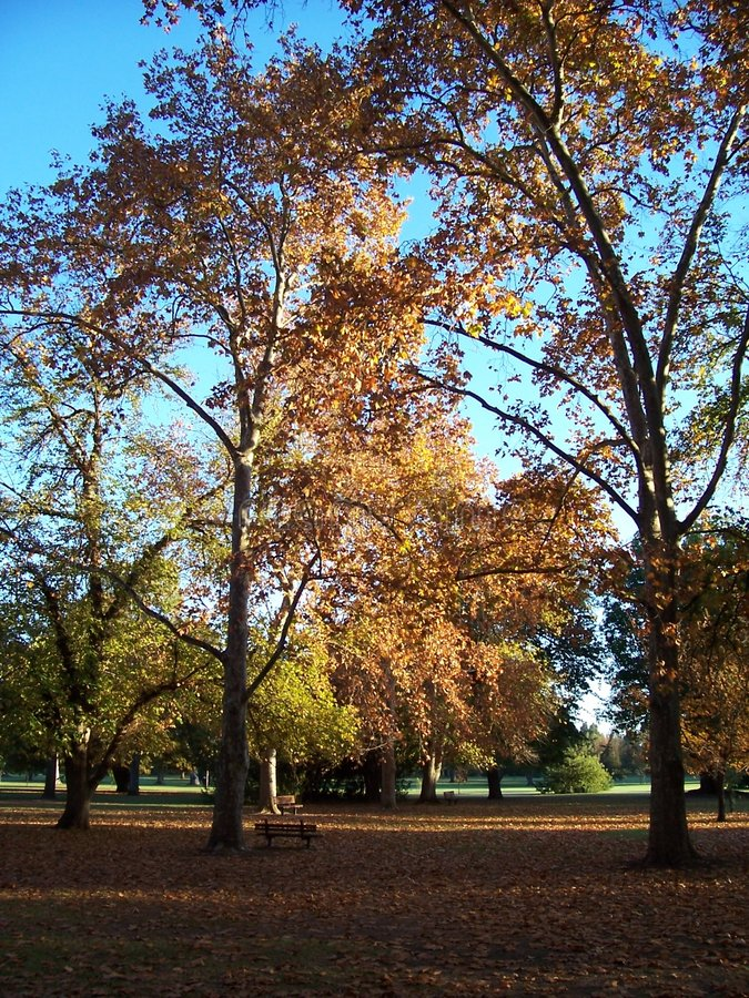 Download Autum Gloden Glow Stock Photos - Image: 134513