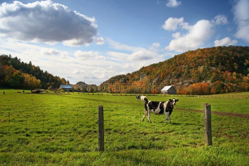 Autum grazing stock photography