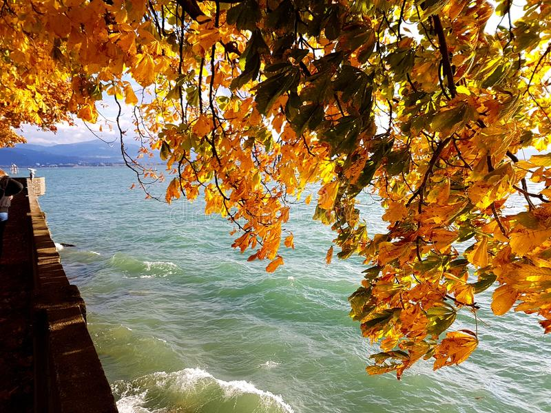 Autum at a Lake. Autum at the Bodensee in Germany stock image