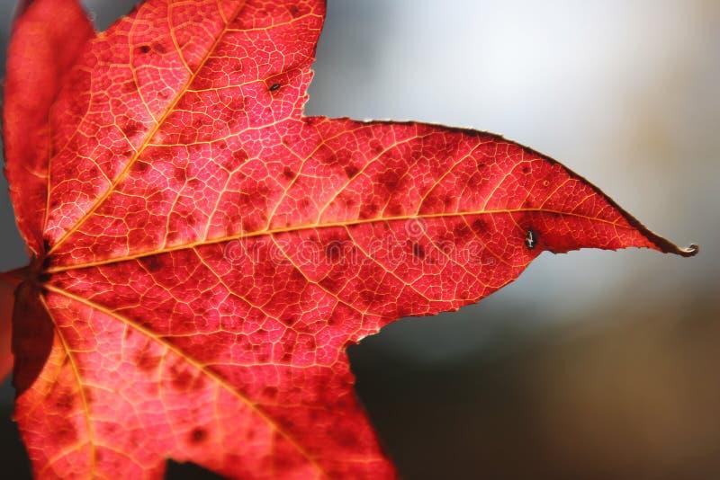 Autum leaf stock photo