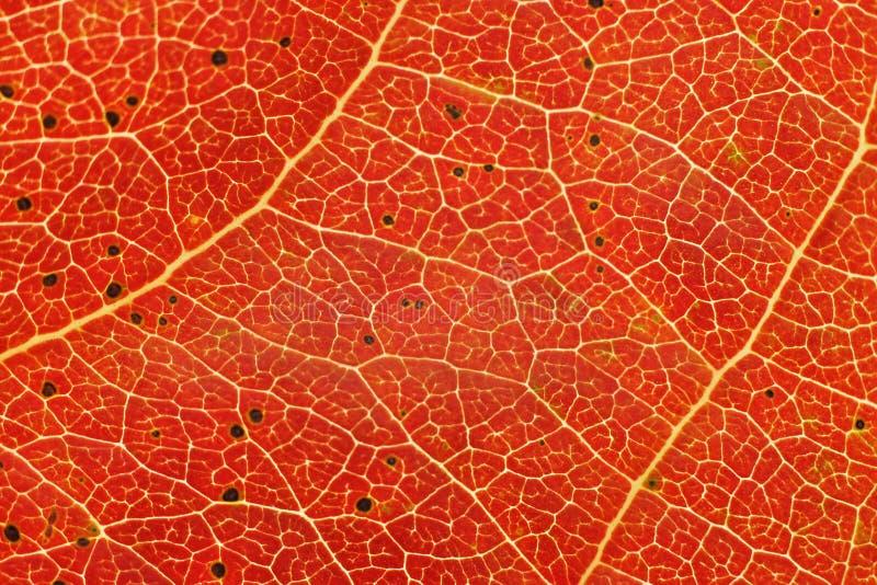 Autum leaf closeup stock images
