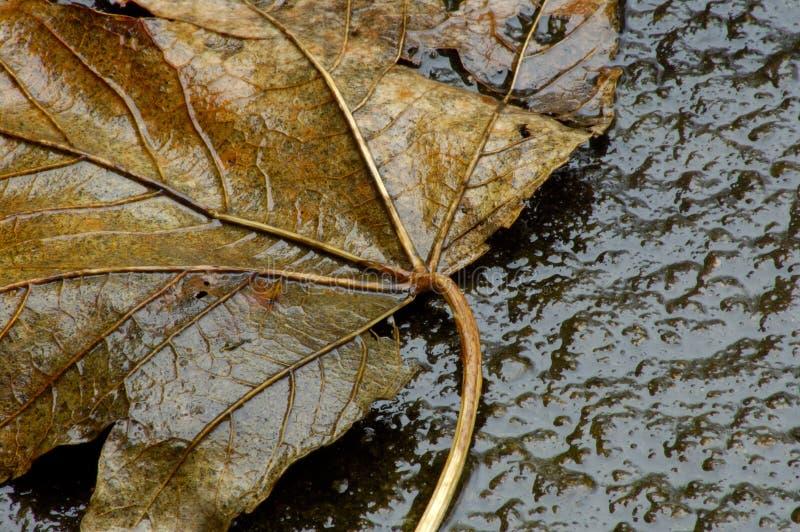 Autum Leaf on concrete stock image