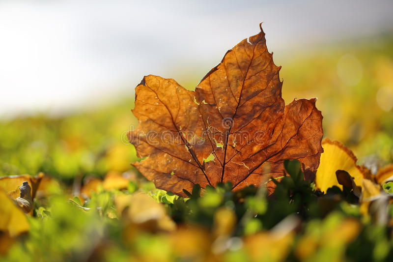 Autum. Leafs on the ground royalty free stock image