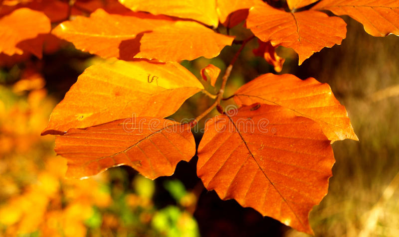 Autum leaves royalty free stock photography