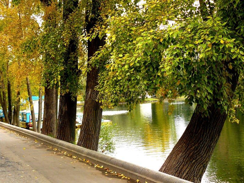 Autum park. Trees near the lake royalty free stock photo