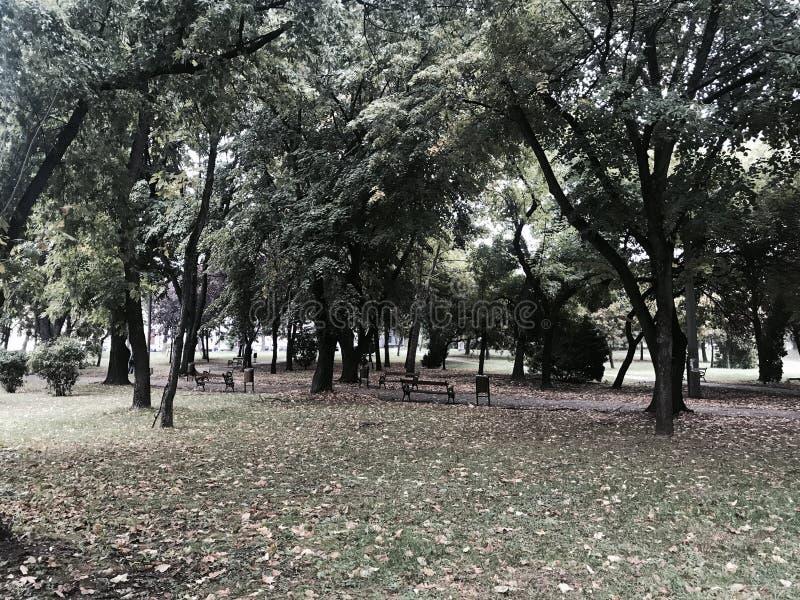 Autum park. Autum after rain park stock images