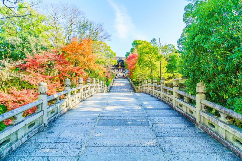 Autum season in japan. Autum season with maple tree in japan royalty free stock images