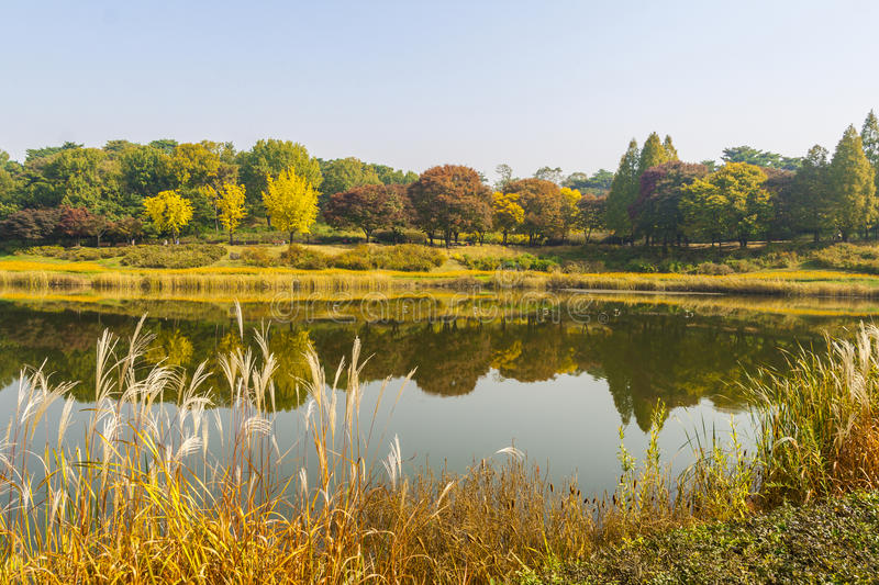 Autum trees and colorful landscape in Seoul, South Korea.  royalty free stock images