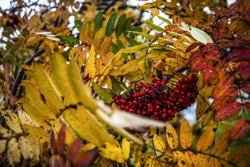 Autumm, листья стоковое изображение rf