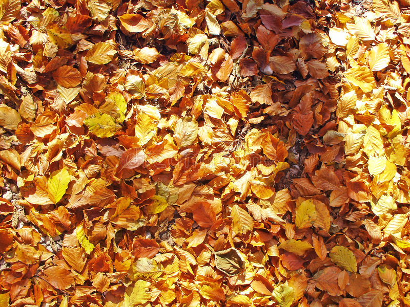Autumn_06 foto de stock royalty free