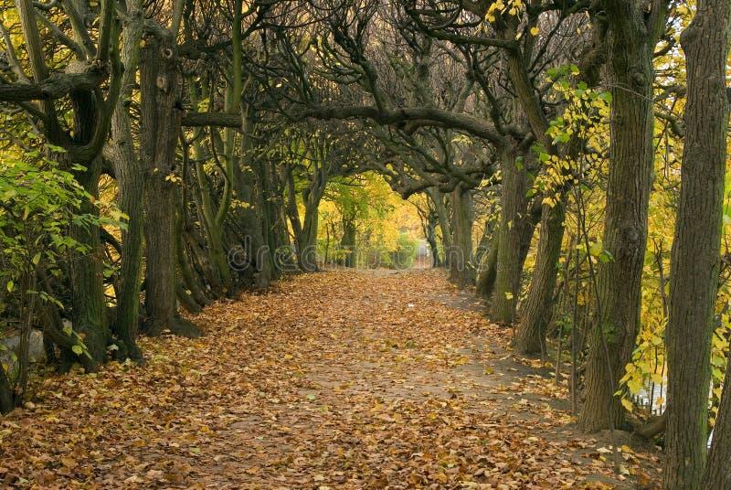 Autumn-1 fotografía de archivo libre de regalías