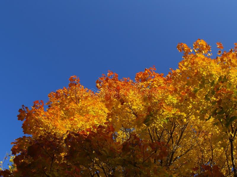 Autumn [10] Free Stock Photography