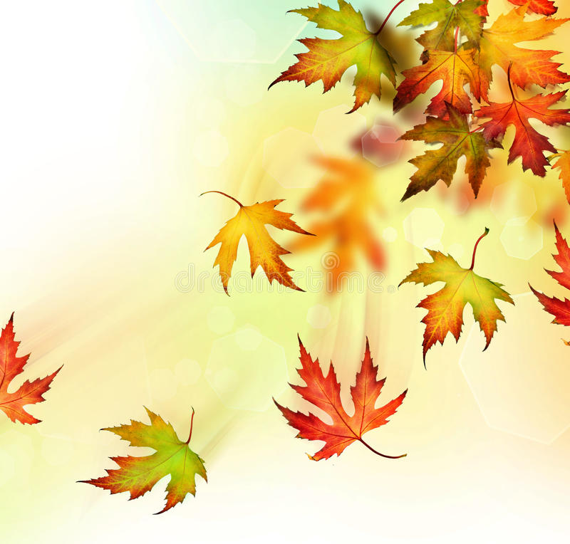 Autumn. Beautiful Colorful Autumn Leaves in motion stock illustration