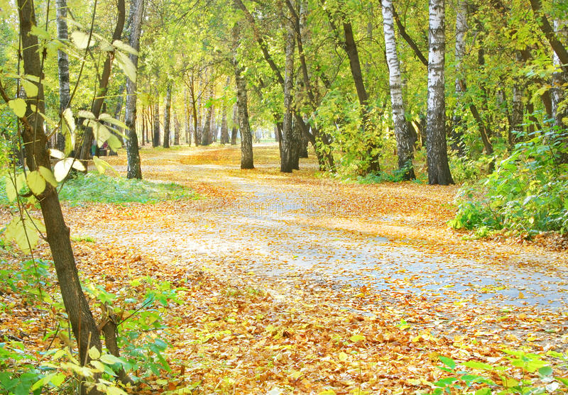 Download Autumn stock image. Image of deciduous, october, lane - 11178553