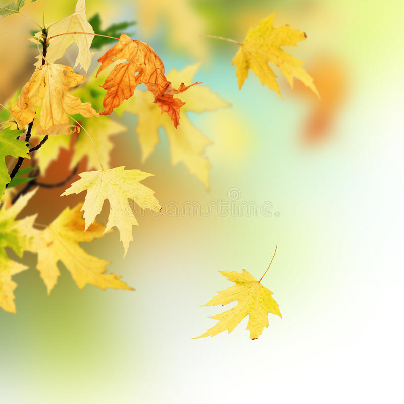 Download Autumn stock image. Image of down, color, brown, bokeh - 11636135