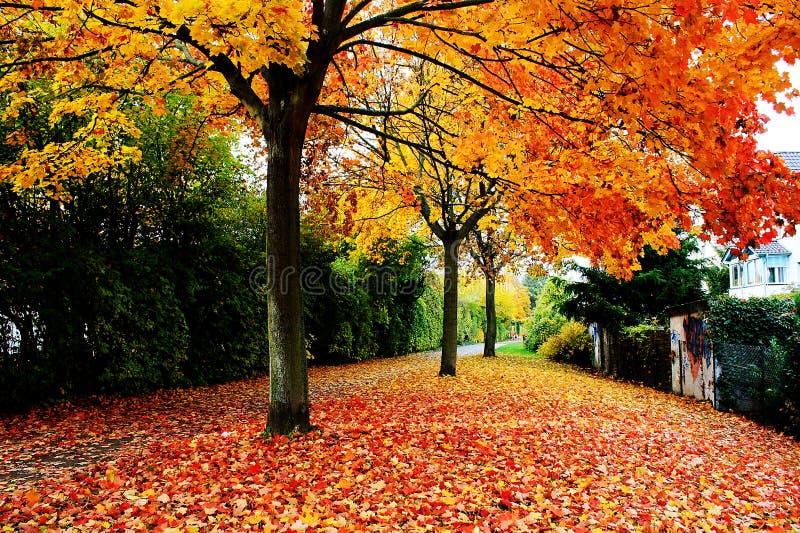 Autumn. The golden scene of Autumn stock photo