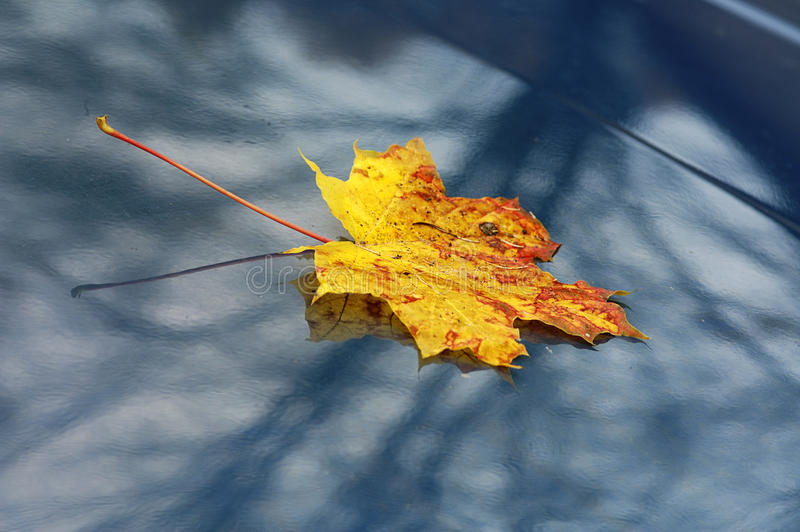 Download Autumn stock image. Image of leaf, yellow, plant, change - 13347005