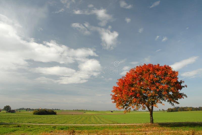 Download Autumn Stock Photo - Image: 1410350