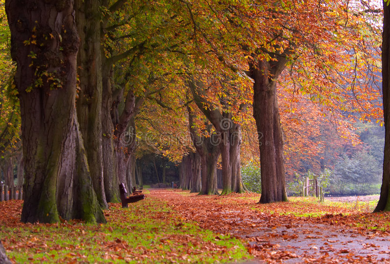 Download Autumn stock photo. Image of forest, maple, fall, change - 1420566