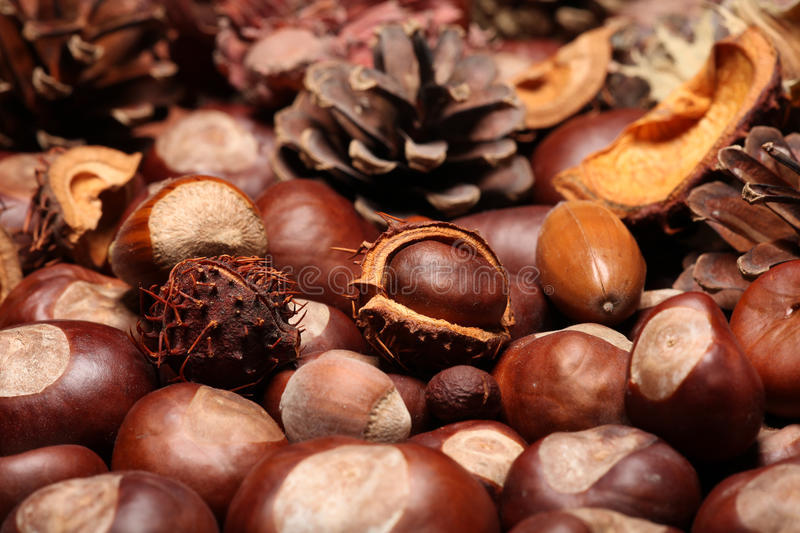 Autumn. Diffrent autumn decoration with nuts and fir cones royalty free stock photos