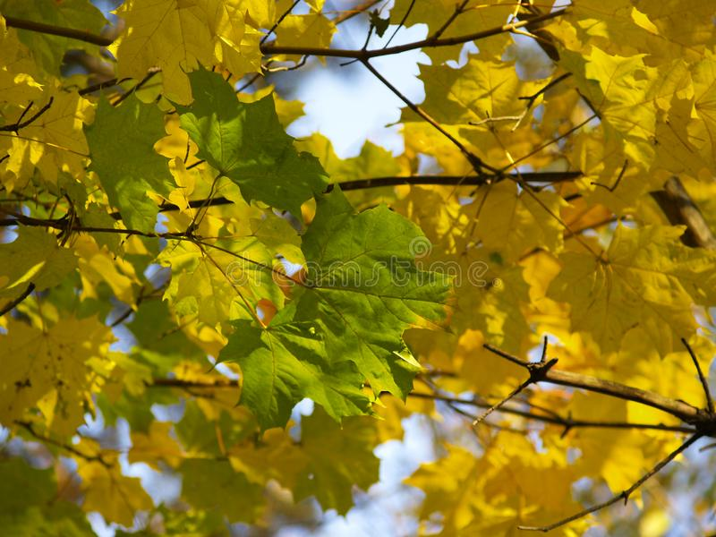 Autumn [16] Free Stock Photos