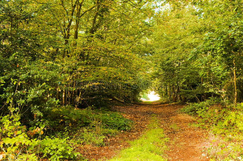 Autumn. Forest with a path royalty free stock images