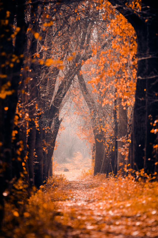 Autumn. A path leading through a wonderful autumn scene royalty free stock images