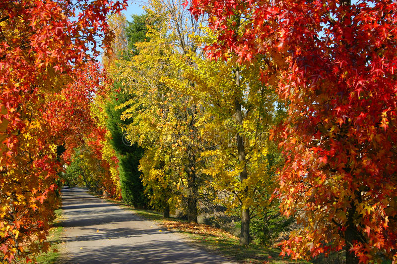 Download Autumn Stock Images - Image: 19257544