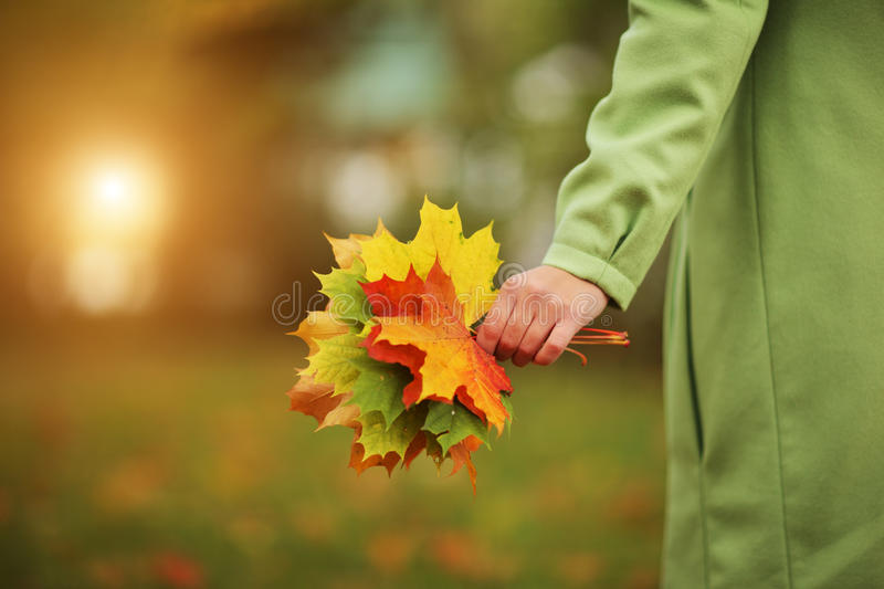 Autumn. Female hand with colorful bouquet of autumn leaves. Closeup royalty free stock photos