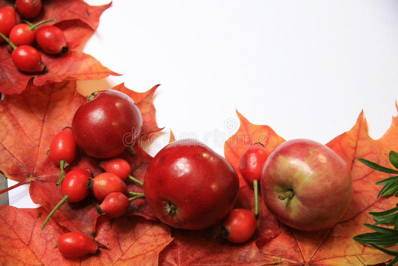 Download Halloween background stock photo. Image of harvest, seasonal - 21479632