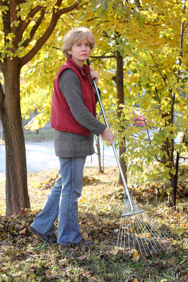 Download Autumn stock photo. Image of collect, lawn, backyard - 22377468