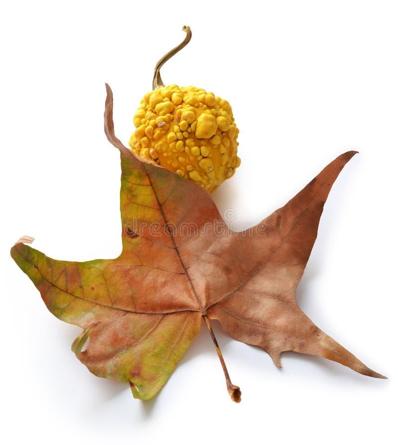 Download Autumn stock image. Image of colorful, arrangement, harvest - 22850419