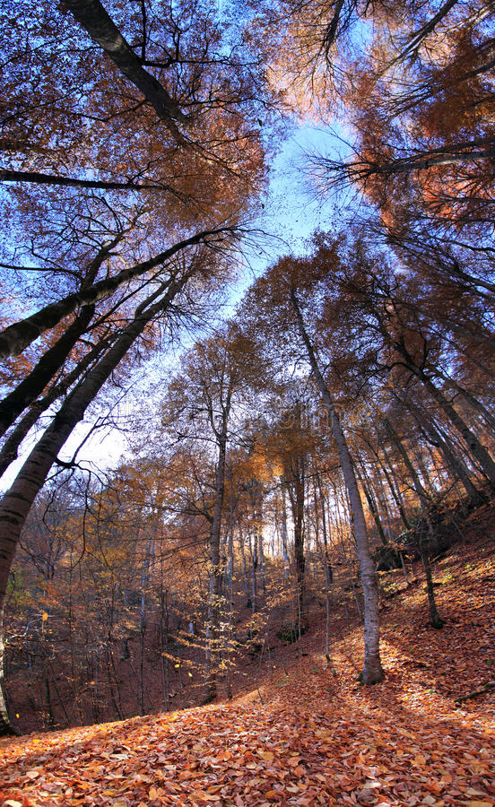 Free Autumn Stock Images - 23172274