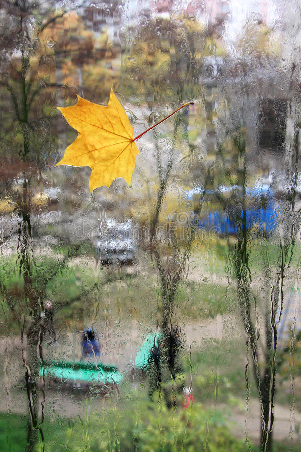 Download Autumn stock image. Image of autumn, orange, rain, maple - 25652545