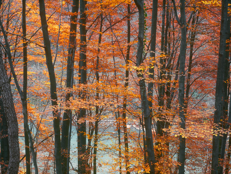 Download Autumn. Royalty Free Stock Photo - Image: 25799255
