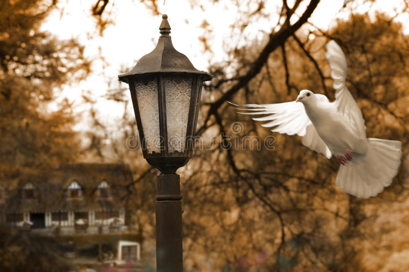 Autumn. A lamp post with a dove in autumn stock images