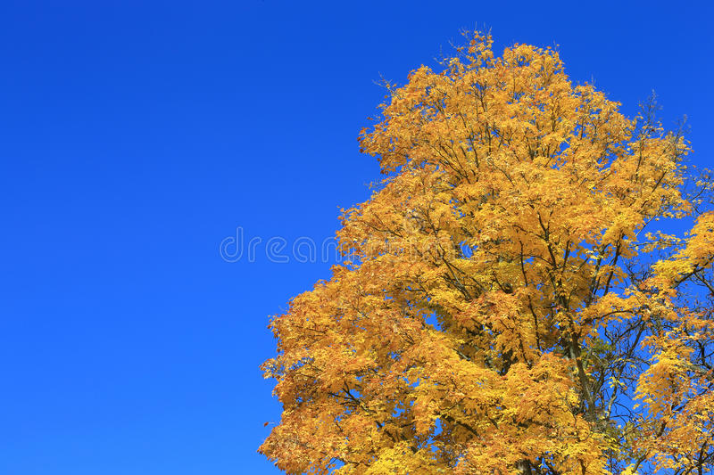 Download Autumn stock image. Image of colors, kitschy, landscape - 27233337