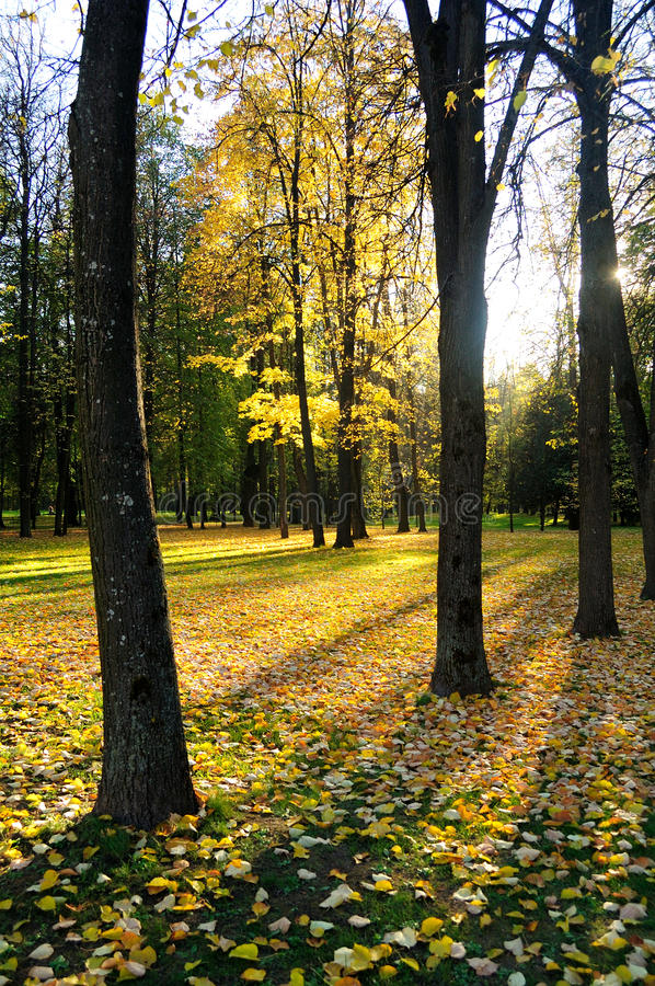 Download Autumn-3 stock photo. Image of boskage, green, grove - 16443368
